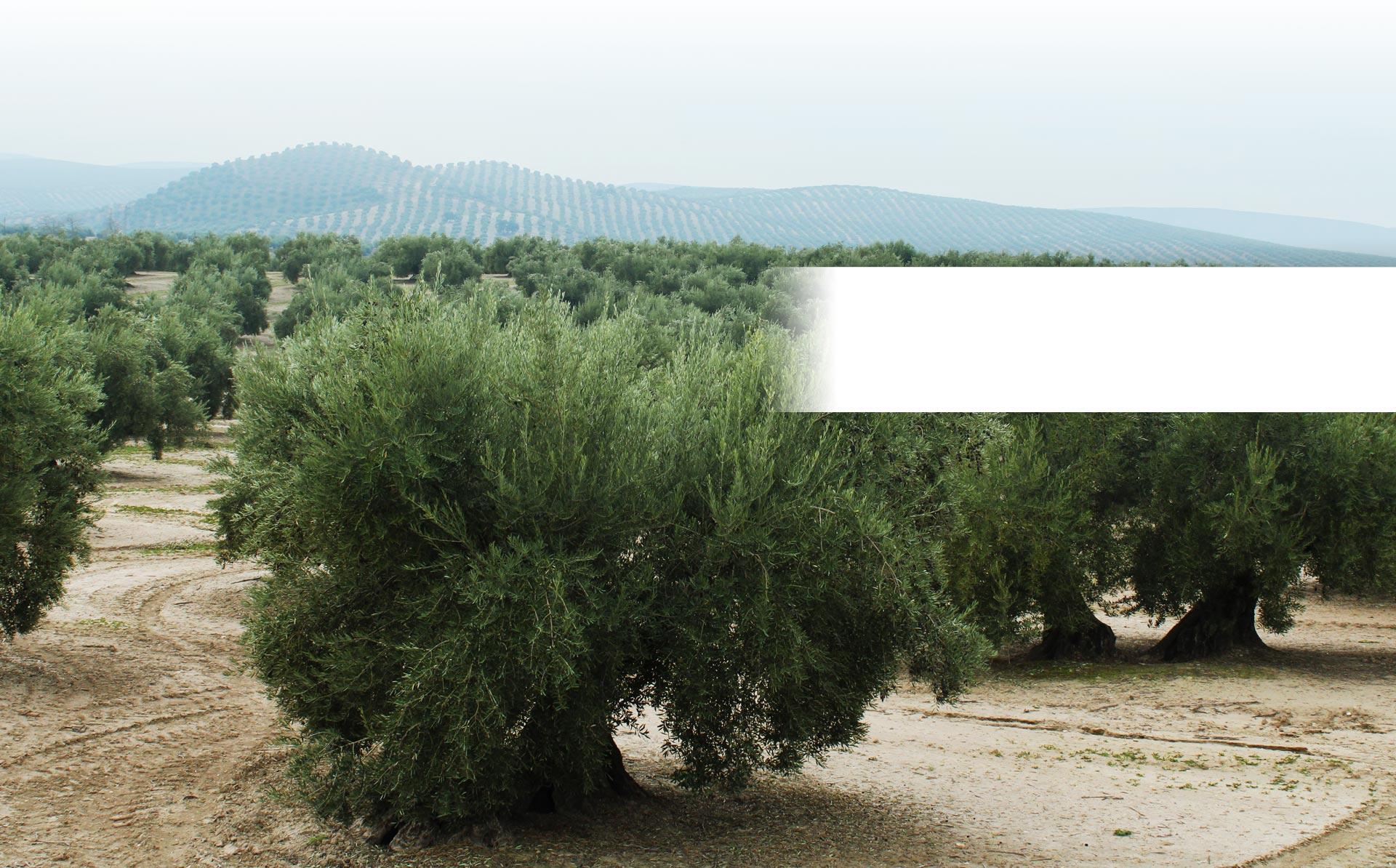 slider olivar